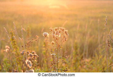 Dry grass on blurred background.