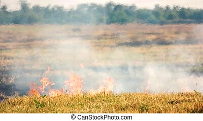 Dry grass on fire.