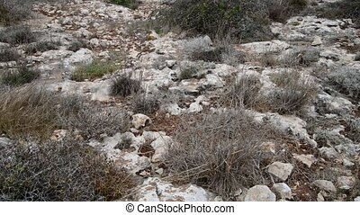 Dry grass on stony ground on Cyprus - Dry grass on the stony...