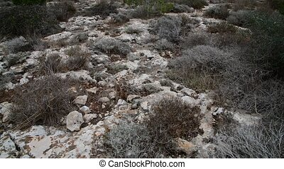 Dry grass on stony ground on the island of Cyprus - Dry...