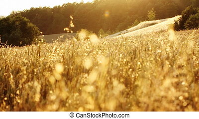 Dry grass on the meadow. Beautiful