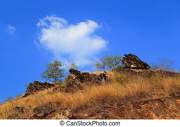 Dry grass on the mountain with blue sky in summer
