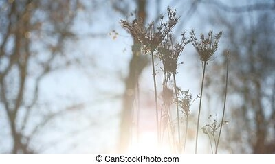 dry grass swaying in the wind silhouette sunlight landscape...