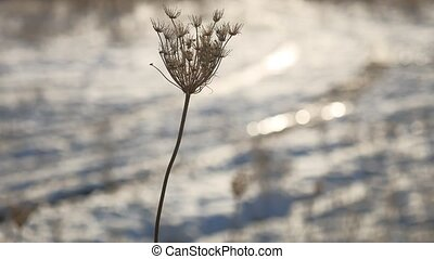 dry grass sways in the wind nature winter snow landscape field sun glare steppe