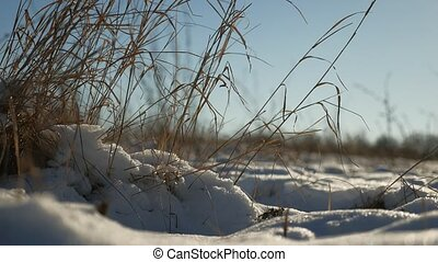 dry grass sways in the wind winter nature snow landscape...