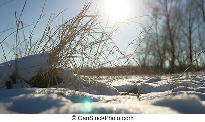 dry grass sways in the wind winter snow landscape field...