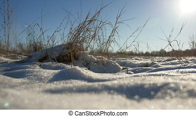 dry grass sways in the wind winter snow nature landscape...