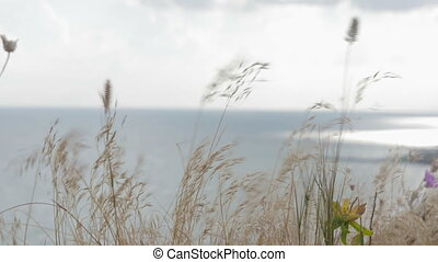 Dry grass varies over a cliff on the background of the sea, ocean