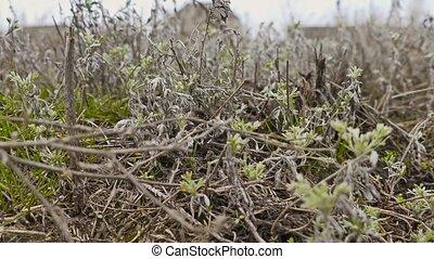dry grass wormwood autumn camera movement