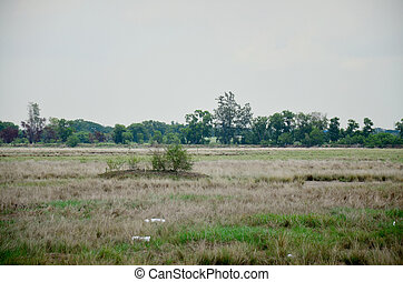 Dry grasslands occur from disposal of Industrial waste and...