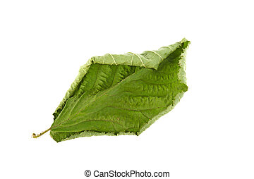 dry green leaf on a white background