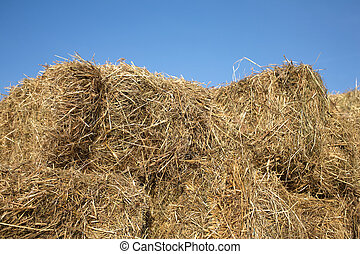 Dry hay against clear cloudless sky