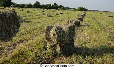 dry haystack girl
