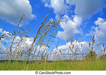 dry herb on green field