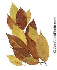 Dry herbarium leaves on white background. - Dry herbarium ...