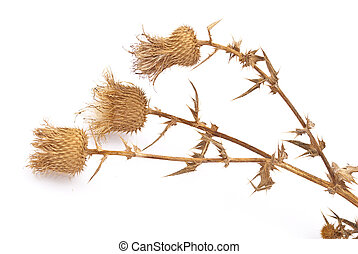 Dry herbs isolated on white