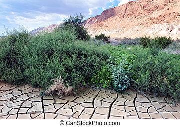 Dry land in the desert