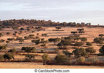 Dry landscape of Alentejo region.