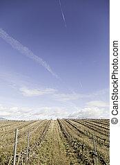 Dry landscape vineyards