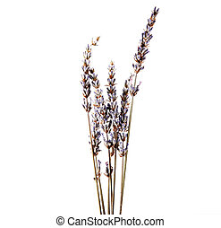 Dry lavender flower isolated on white background. Lavandula (common name lavender) is a genus of 47 known species of flowering plants in the mint family, Lamiaceae.