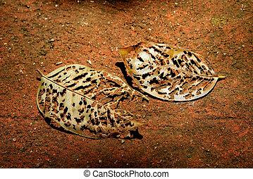 Dry leaf 1