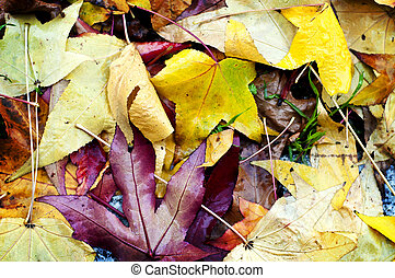dry leaf fall