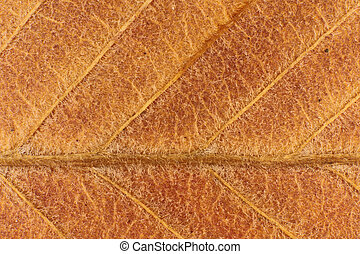 Dry Leaf Fibers Texture. Macro Closeup. Natural Organic Background. Transparent Floral Pattern.