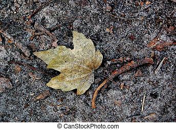 dry leaf on the ground - dark dry leaf on the black earth