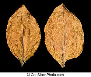 leaf tobacco - dry leaf tobacco closeup on the black...