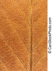 Dry Leaf Tree Texture. Macro Closeup. Natural Organic Background. Transparent Floral Pattern.