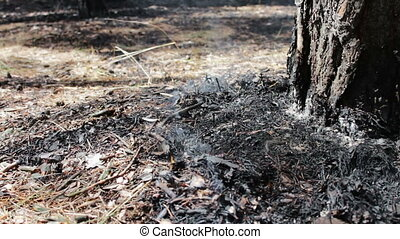 Dry leaves and needles smoke under tree in the forest....