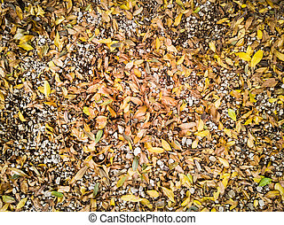 Dry leaves and stones in the garden