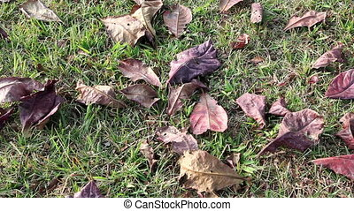 Dry Leaves falling on the ground