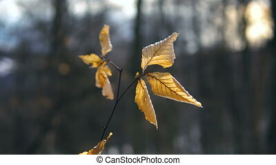 dry leaves hanging on a tree in a winter forest