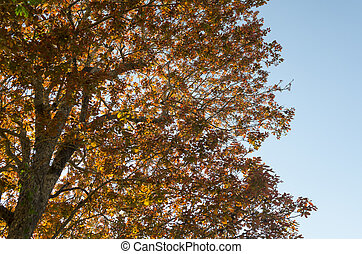 Dry leaves in autumn with blue sky
