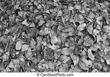 Dry leaves in black and white 2.