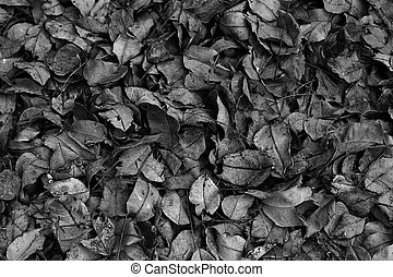 Dry leaves in black and white.