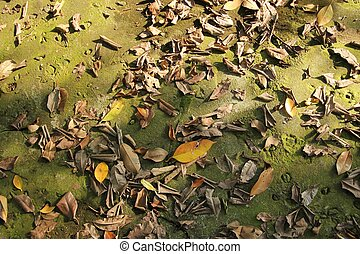 dry leaves in the forest