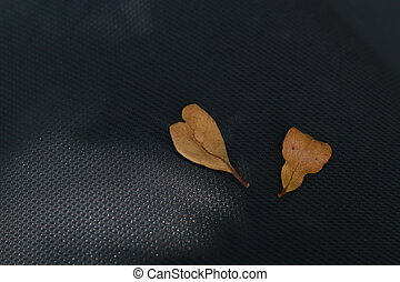 Dry leaves on a black background.