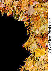 Dry leaves on a dark background