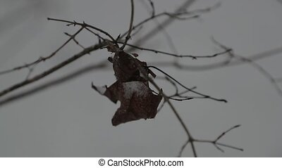 Dry leaves on a tree branch in winter.