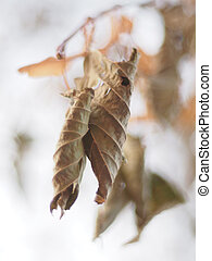 dry leaves on a tree in winter