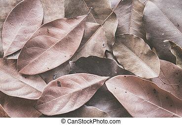 Dry leaves on floor background