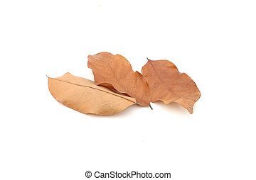 Dry leaves on isolated white