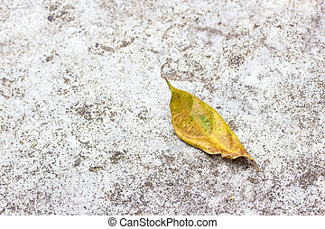 Dry Leaves On The Cement Floor