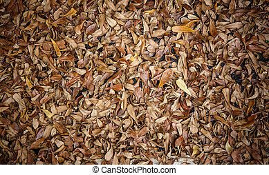 Dry leaves on the floor background.