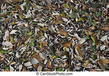 Close up of dry leaves on the ground in autumn