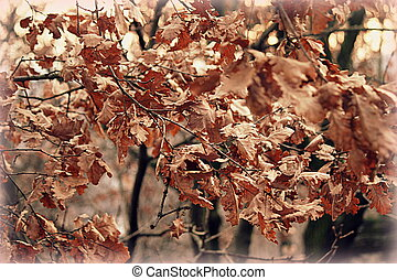 dry leaves on the tree