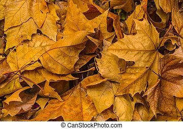 Dry Leaves Patttern Photo - Closeup shot dry leaves pattern ...