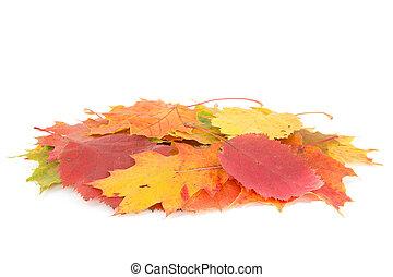 Dry leaves pile